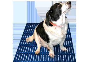 animal flooring