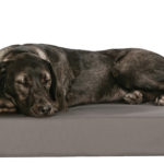 Dog Bed products