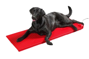 Black lab laying on a red Poly Pet Heat Mat