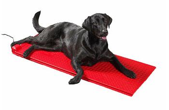 black labrador on a poly pet heat mat
