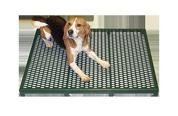 green raised cage floor